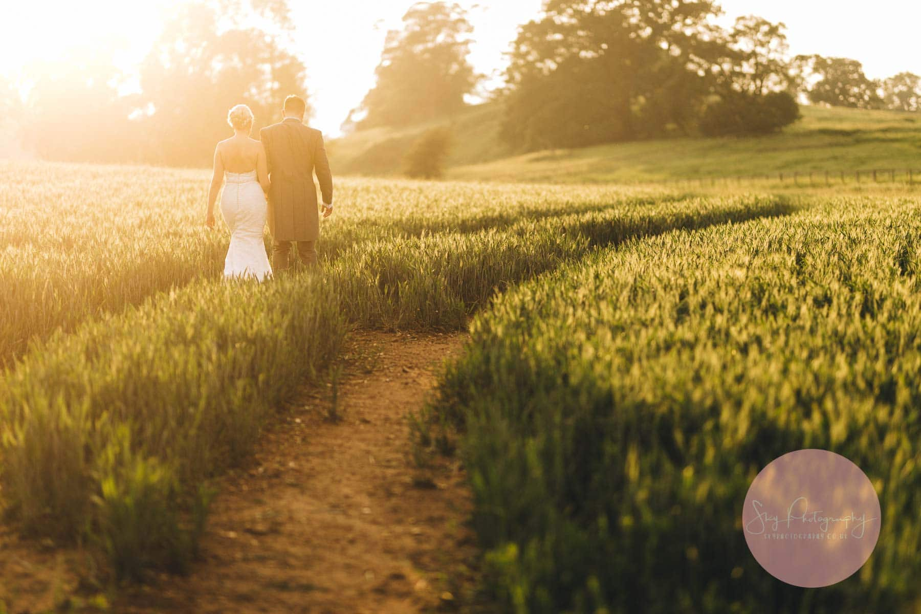 Golden hour wedding photography, walking through a corn field