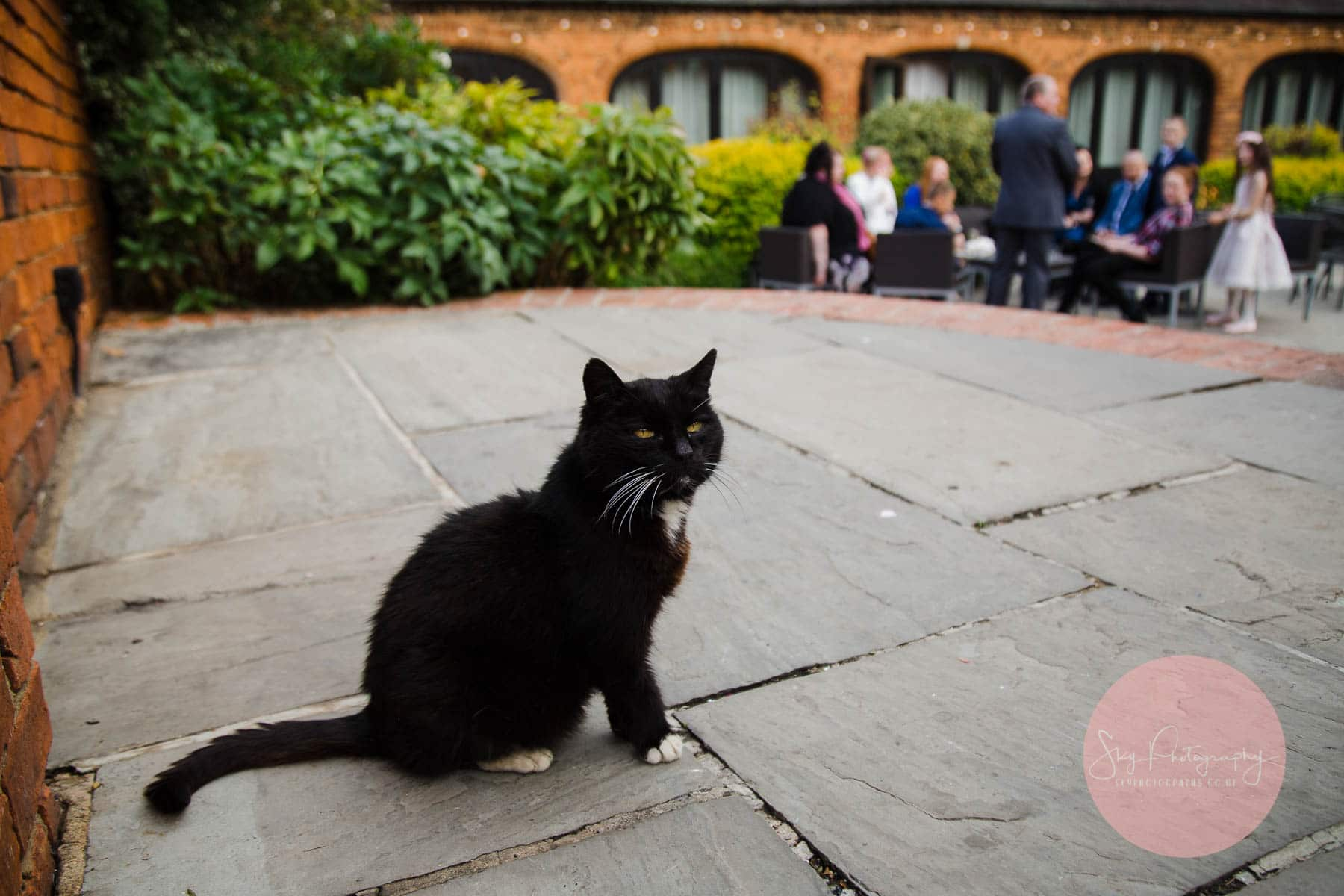 Dodmoor cat watching the wedding